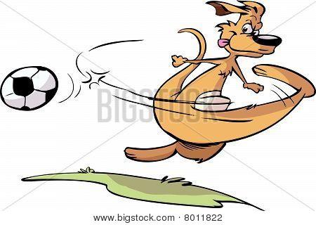 soccer kangaroo