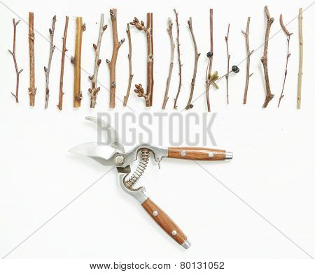 Pruning concept