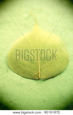 Soft Leaf Grungy Background
