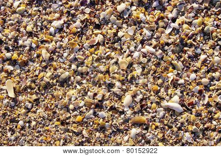 Mussel Shells And Snails On The Beach