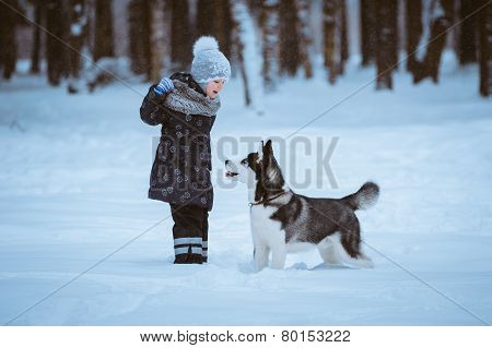 Little Girl Playing With Husky