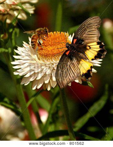 BUTTERFLY ON FLOWERS 8
