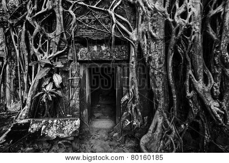 Travel Cambodia concept background - ancient stone door and tree roots, Ta Prohm temple ruins, Angkor, Cambodia. Black and white version