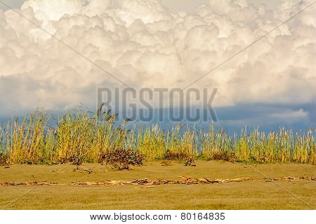Vegetation By The Beach In Montenegro