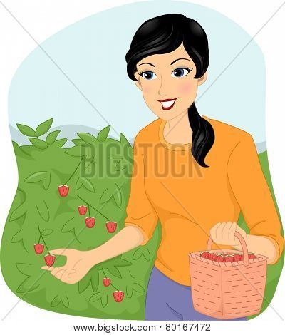 Illustration of a Girl Picking Berries and Gathering Them in a Basket