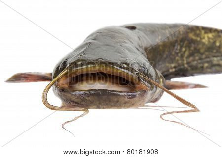 Big River Catfish