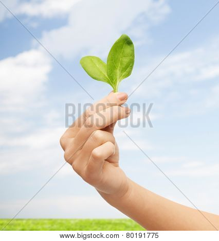 people, ecology, biology and environment concept - close up of woman hand with green sprout over blue sky and grass background