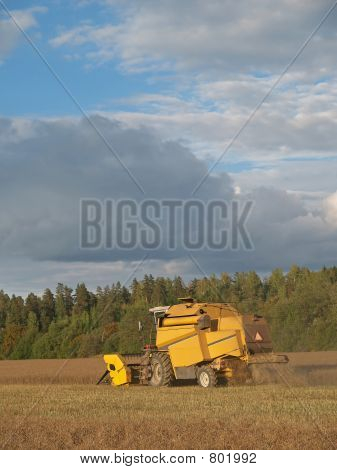 Harvester-thresher cuts rapeseed field