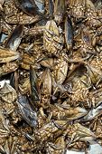 image of water bug  - mix of water bugs or insect fried with pandanus leaves - JPG