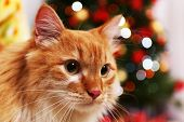 foto of lovable  - Lovable red cat on Christmas tree background - JPG