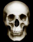 foto of eye-sockets  - The Human skull isolated on dark background - JPG