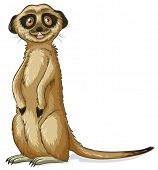picture of meerkats  - Illustration of a close up meerkat - JPG