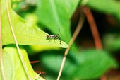 stock photo of flying-insect  - close - JPG
