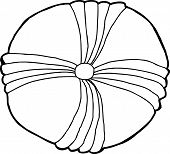 foto of echinoderms  - Isolated outline drawing of common echinoderm fossil - JPG