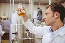 picture of beaker  - Focused scientist looking beaker with beer in the factory - JPG