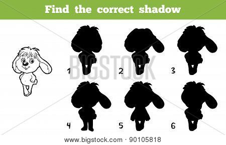 Find The Correct Shadow (rabbit)