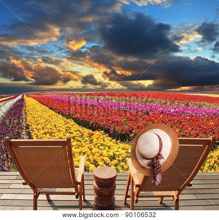 Spring blooming buttercups grow stripes of different colors. Two deck chairs on the platform are at the colorful flower fields. At one hanging elegant straw hat