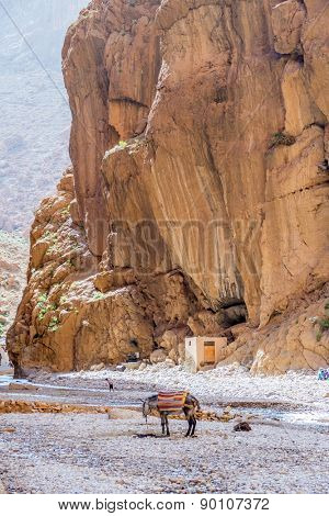 TINERHIR, MOROCCO, APRIL 11, 2015: People and lonely donkey on shore of Todgha river in Todgha Gorge