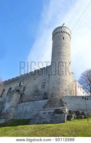 Pikk Hermann Tower In Tallinn.