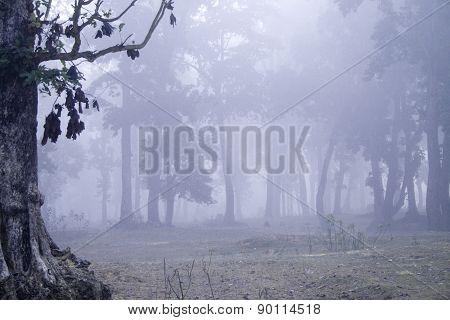foggy dawn on a sal forest, Bardia national park, Nepal