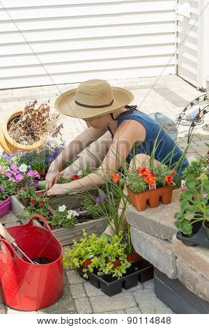 Attractive Woman Potting Up Nursery Seedlings