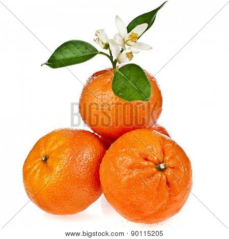 Beautiful citrus  tangerine  with blooming  twig  isolated on white background