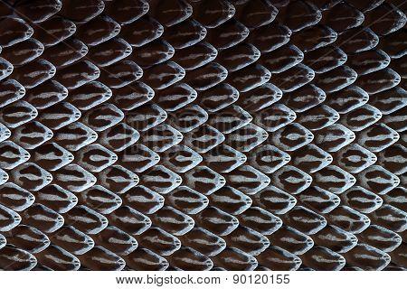 Snake Skin, Snake Molt