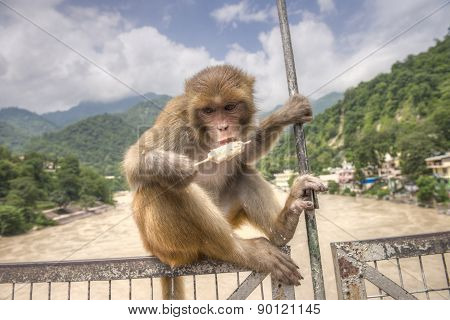 One Monkey Sits On The Bridge And Eats  Ice-cream