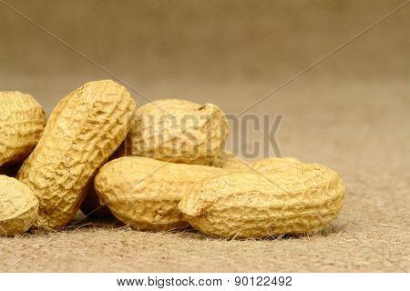 Peanut Closeup