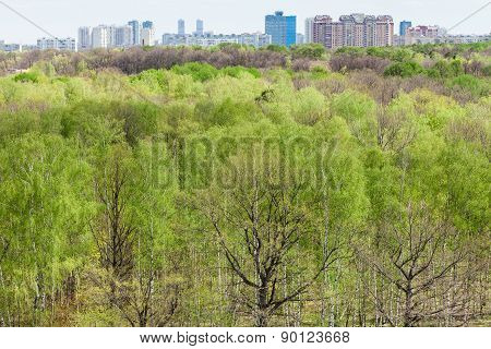 Modern Urban Houses And Green Forest In Spring