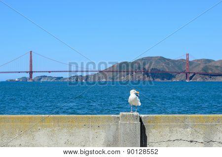 Bird with Golden gate bridge in background