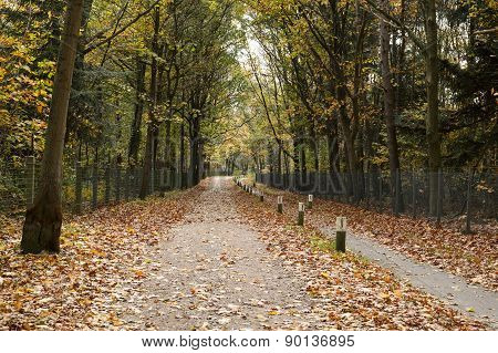 Pedestrian and bicycle path in forest