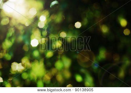 de-focused green backgrounds