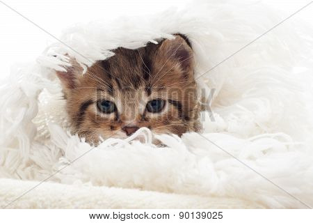 Funny Cat Muzzle