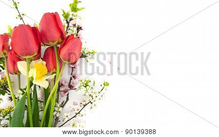 Spring Flowers, Red Tulips, Daffodil And Blossoming Branches, Isolated On White Background With Spac