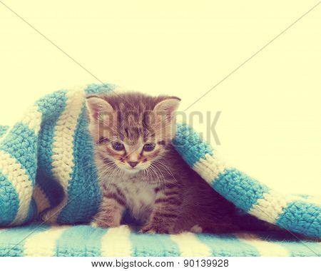 Funny Cute Tabby Kitten