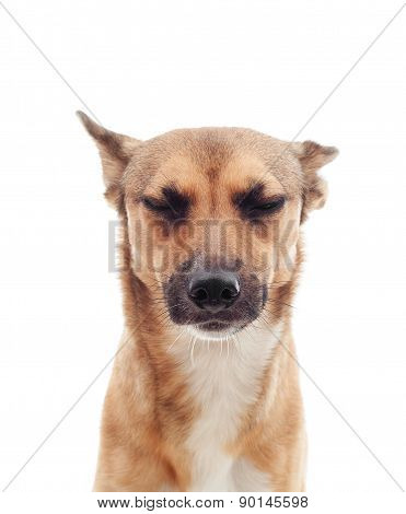 Portrait Of Unhappy Dog
