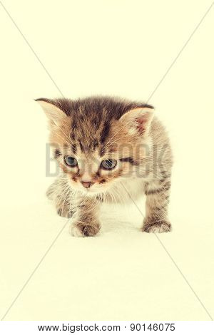 Slinking Little Tabby Kitten