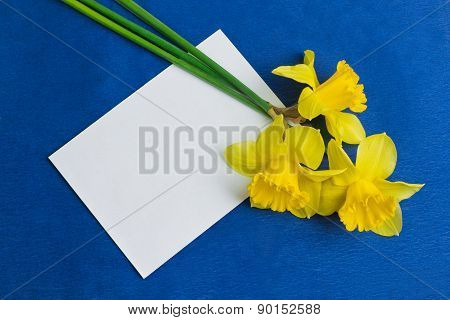 Narcissus Flowers And An Envelope On Blue Background