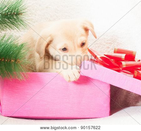 Puppy Gnaws  Gift Box