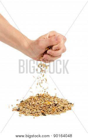 Human Hand Pours Grain