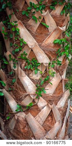 Natures Lattice in a Palm Trunk