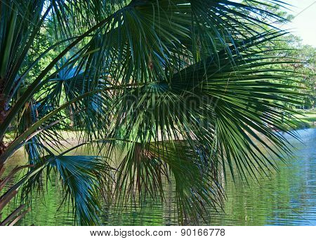 Palm Fronds Over the Water