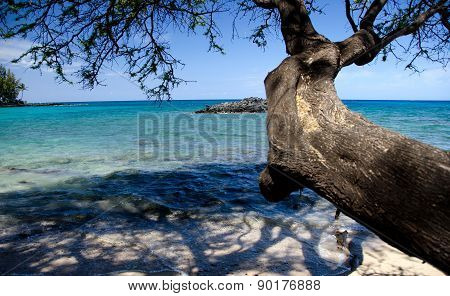 Ironwood Branches Reaching Rocks At Beach 69