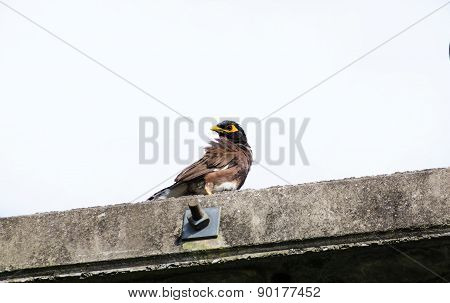 Sparrow On Electricity Post Isolated