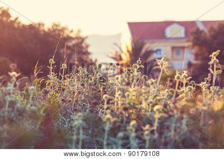 lawn near house