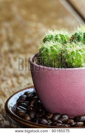 Cactus On Coffee Dish
