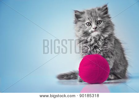 Cute Kitten Playing With Pink Ball Of Wool Studio Isolated