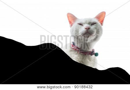 Isolated White Cat On A House Roof Looking Up Perspective