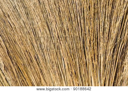 Closeup Hair Brown Broom